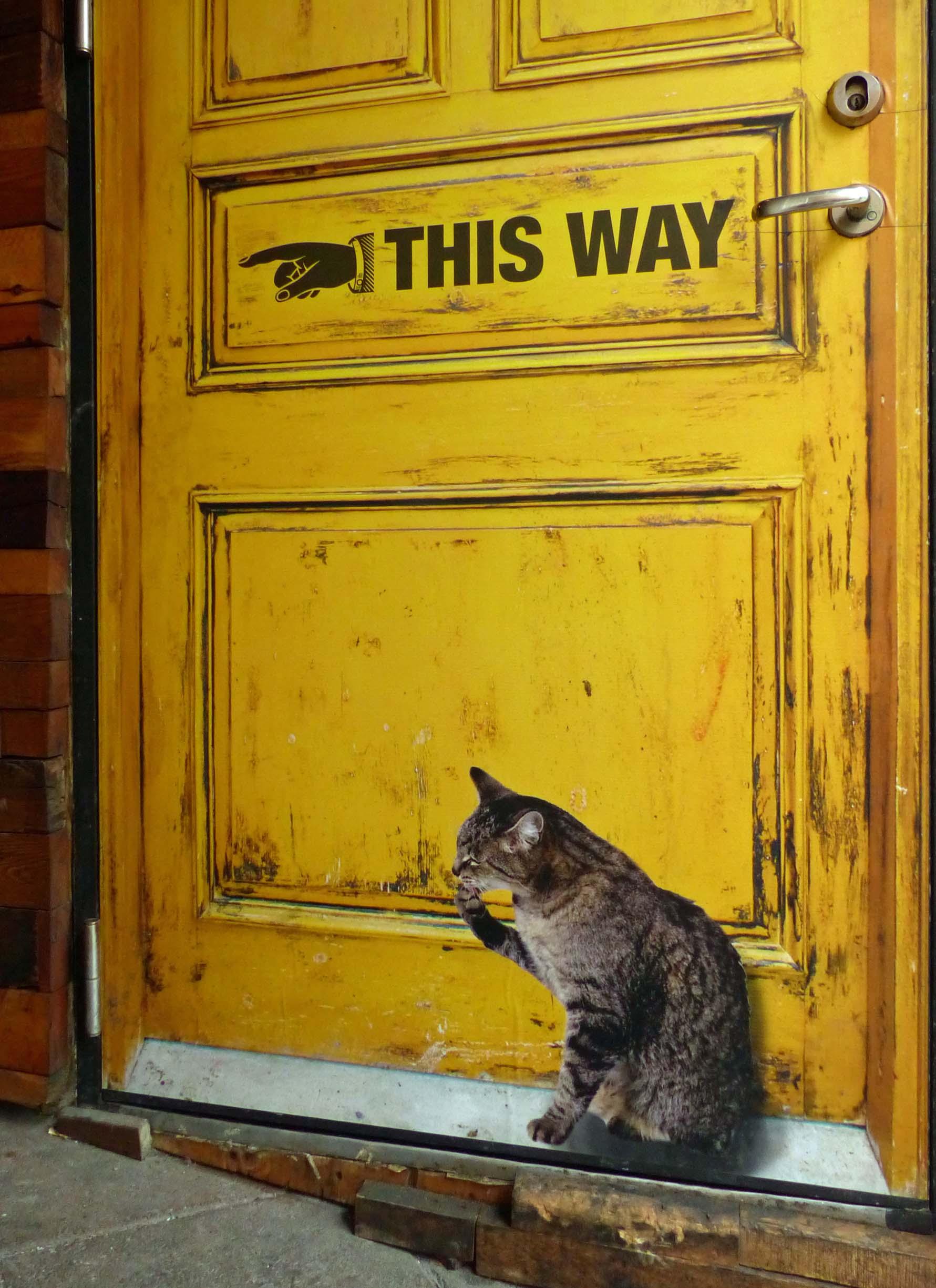 Mural of yellow door with small cat