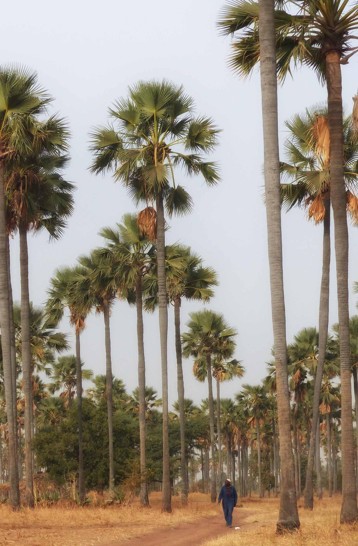 Man walking past tall palms