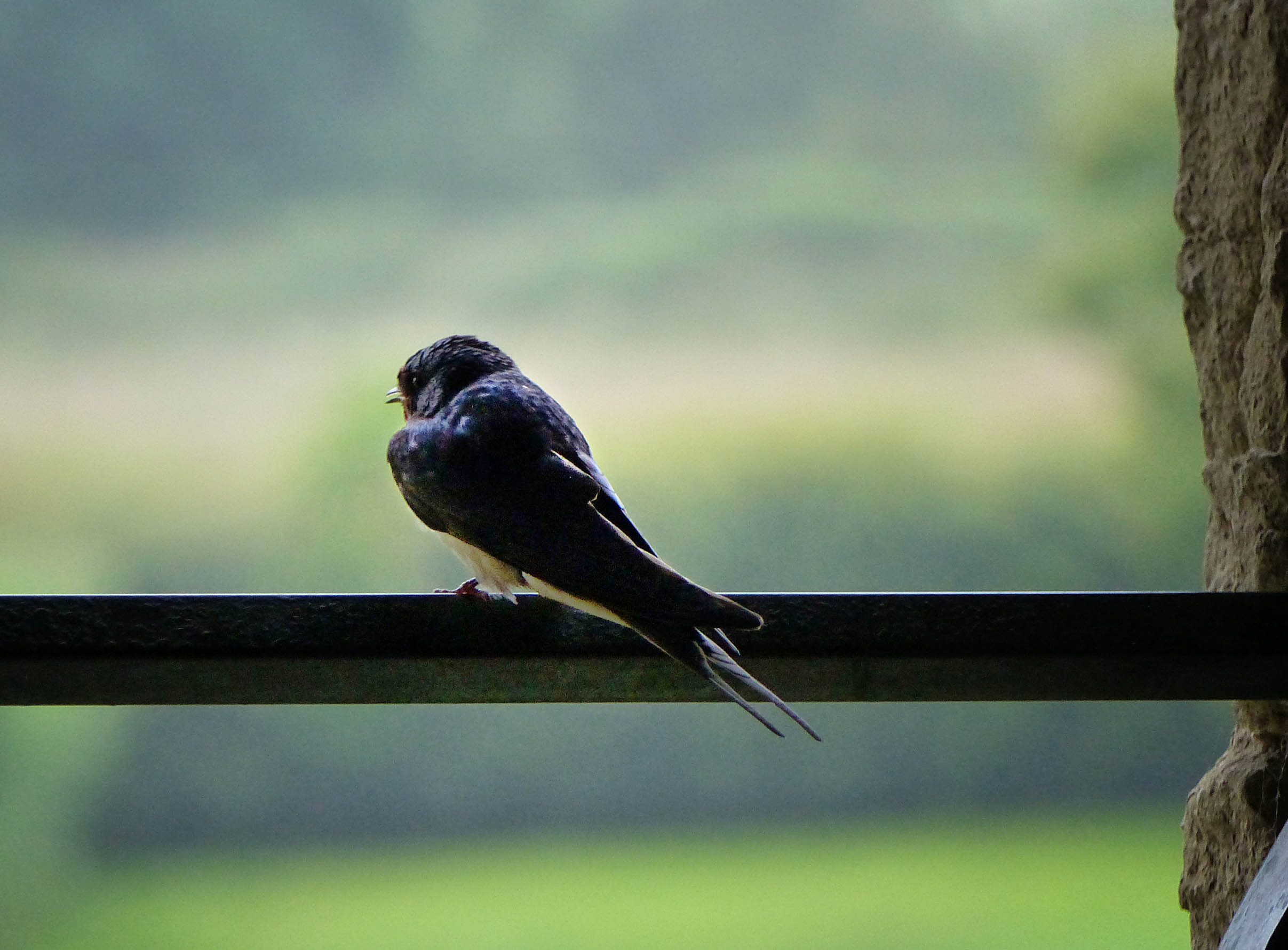 Bird perched on a rail with trees behind
