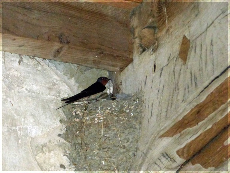Bird on a nest in the corner of wall and ceiling