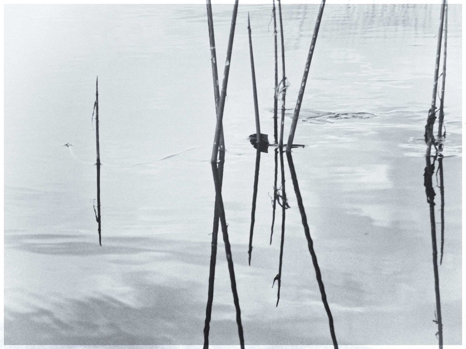 Black and white photo of a few sticks reflected in water