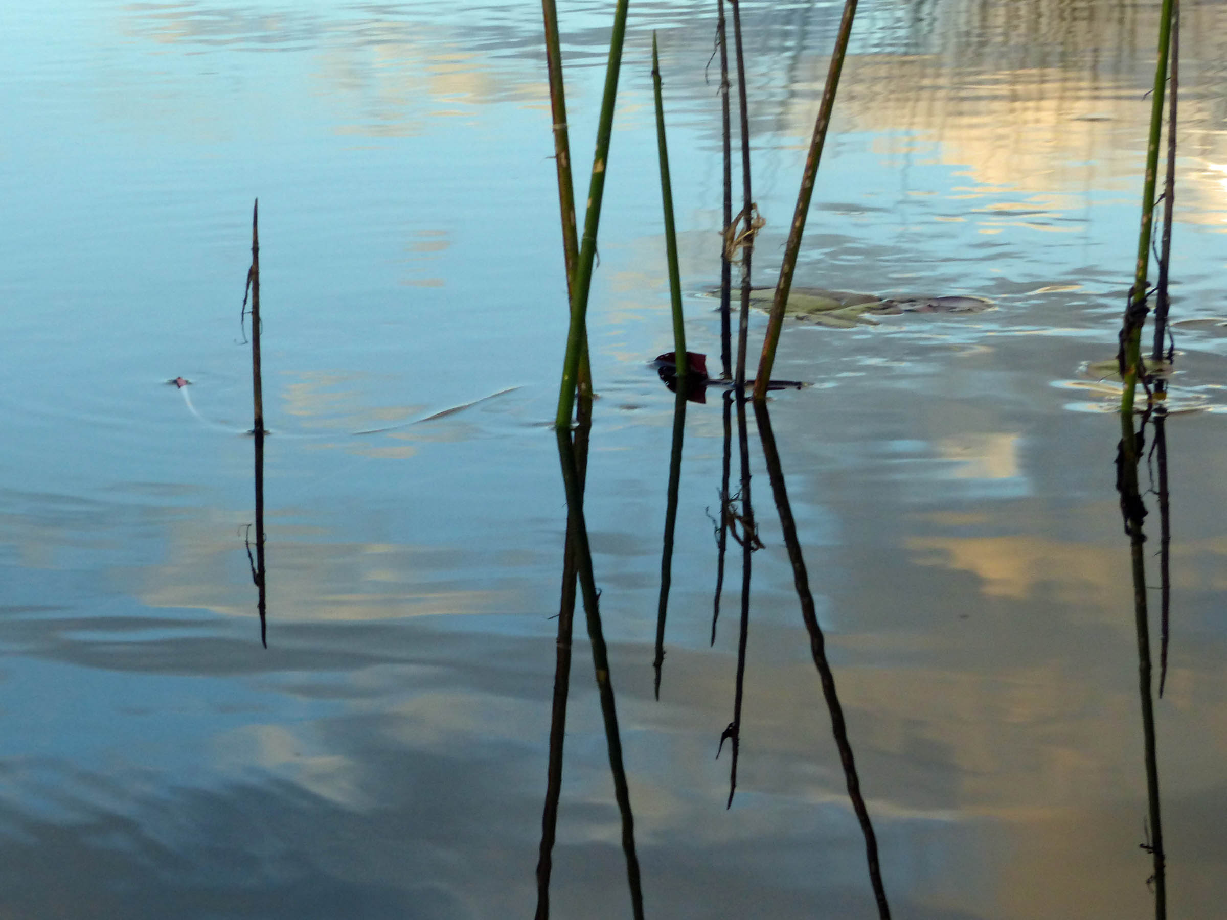 A few sticks and the sky reflected in water