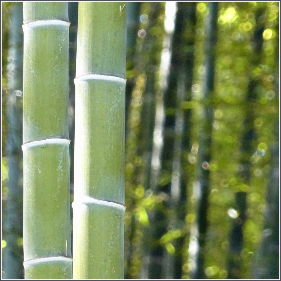 Large green bamboo trunks