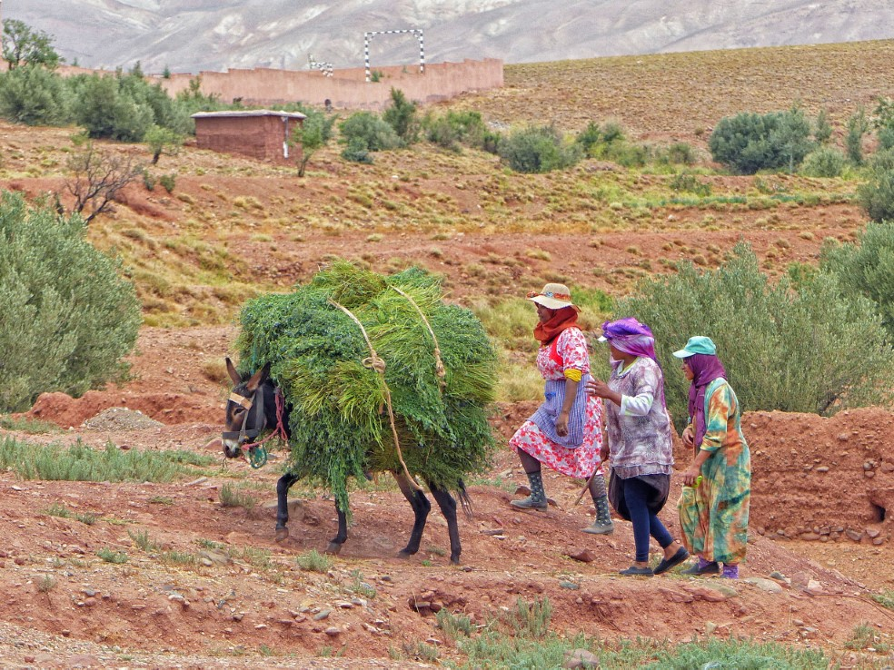 Three women with a donkey carrying bundles of grass