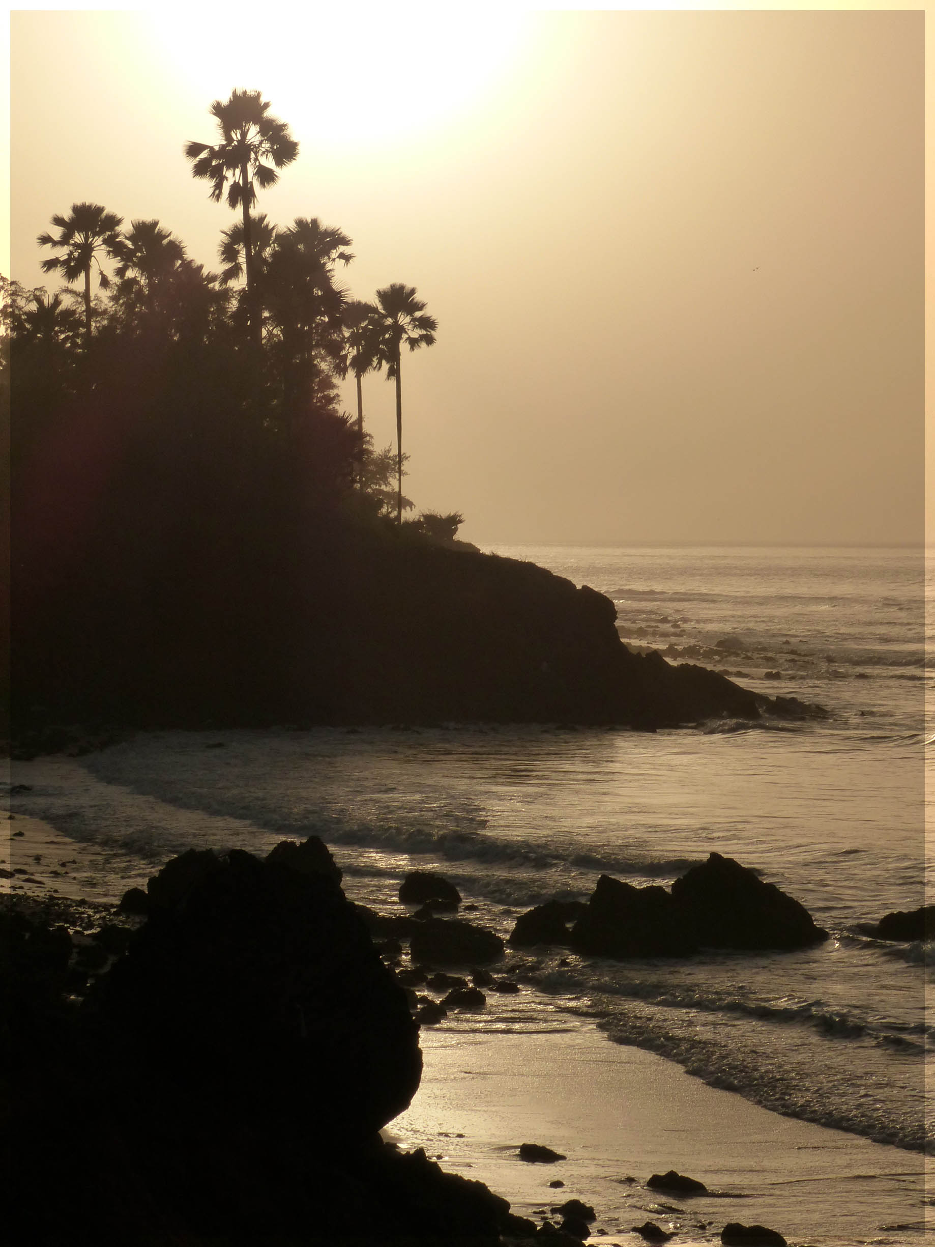 Low cliffs and palm trees silhouetted against the sun