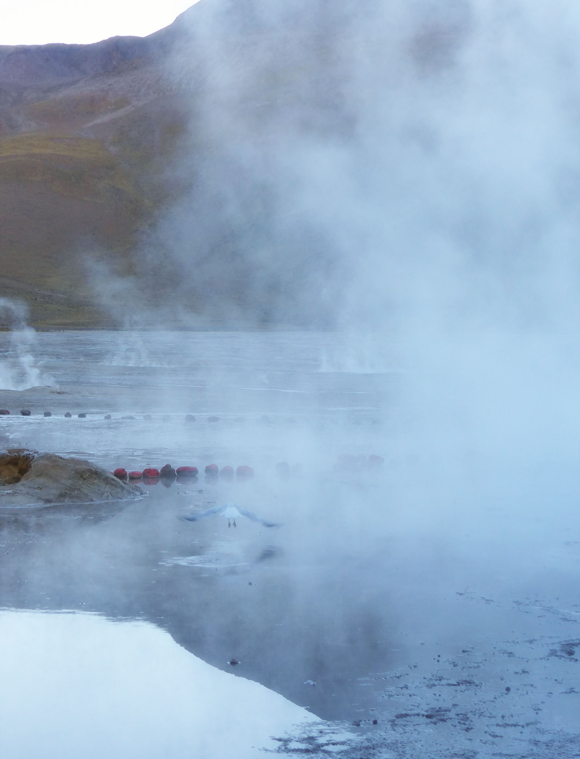 Steam rising from geysers