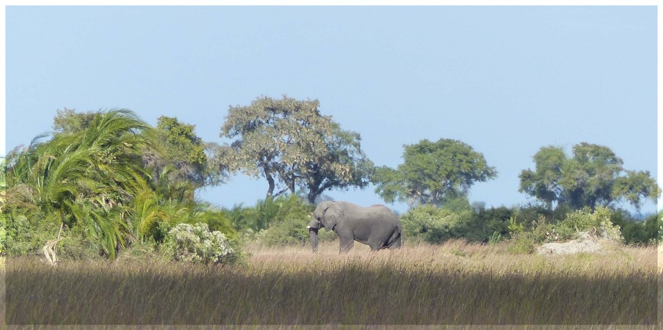 Elephant among grass and trees