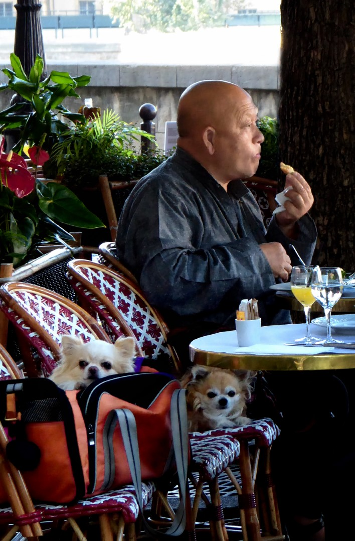 Man in a cafe with two small dogs