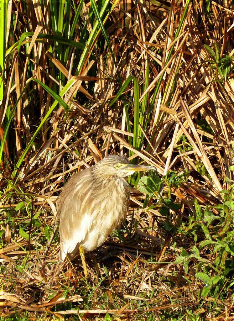 Brown bird among tall grasses