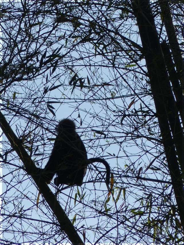 Monkey silhouetted in tree