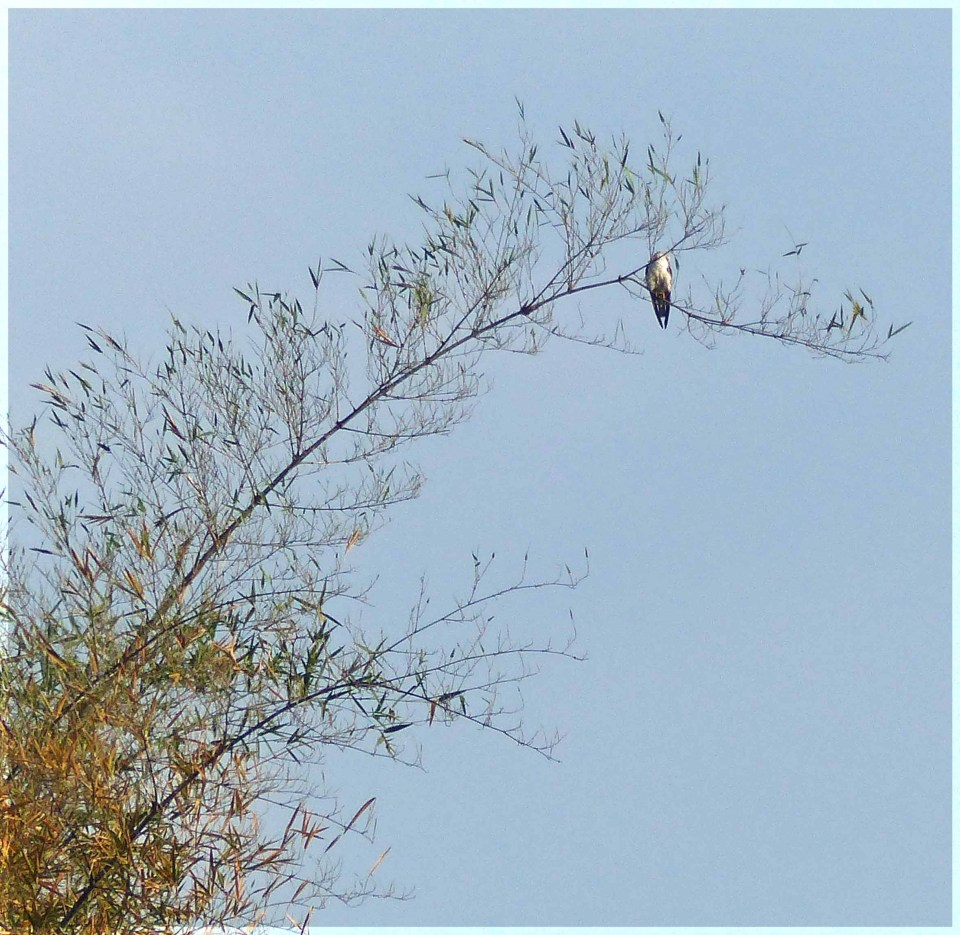Bird high in a tree