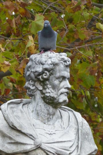 Statue of man with pigeon on his head