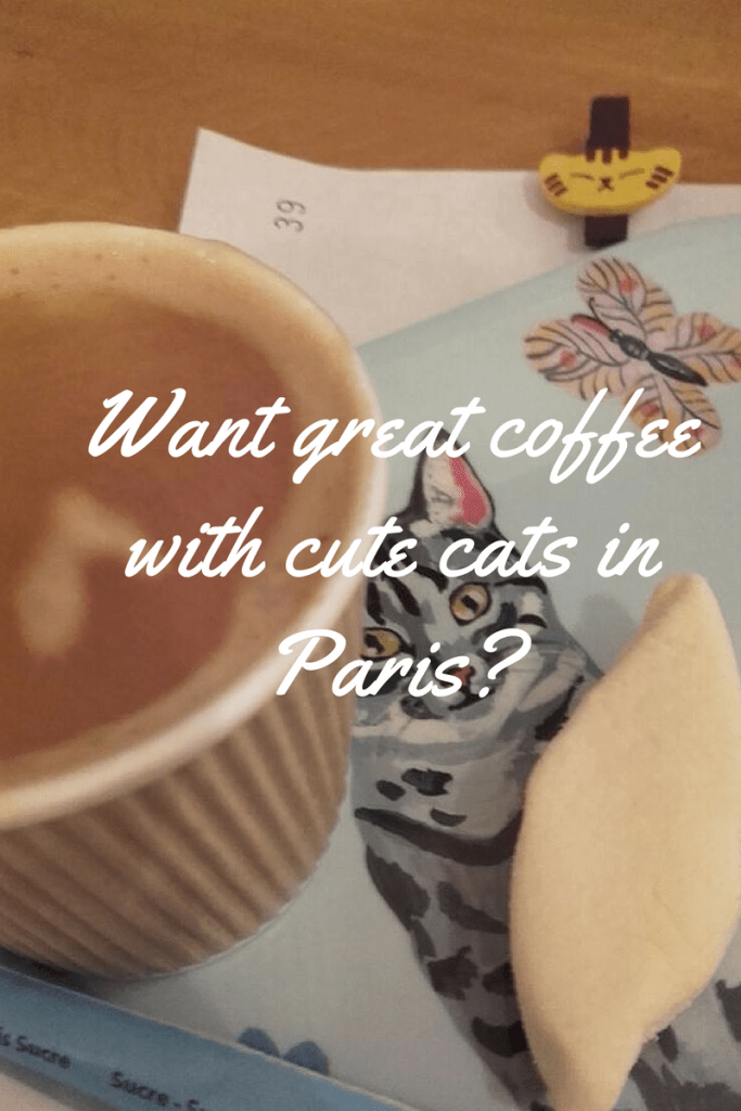 Want great coffee with cute cats in Paris?