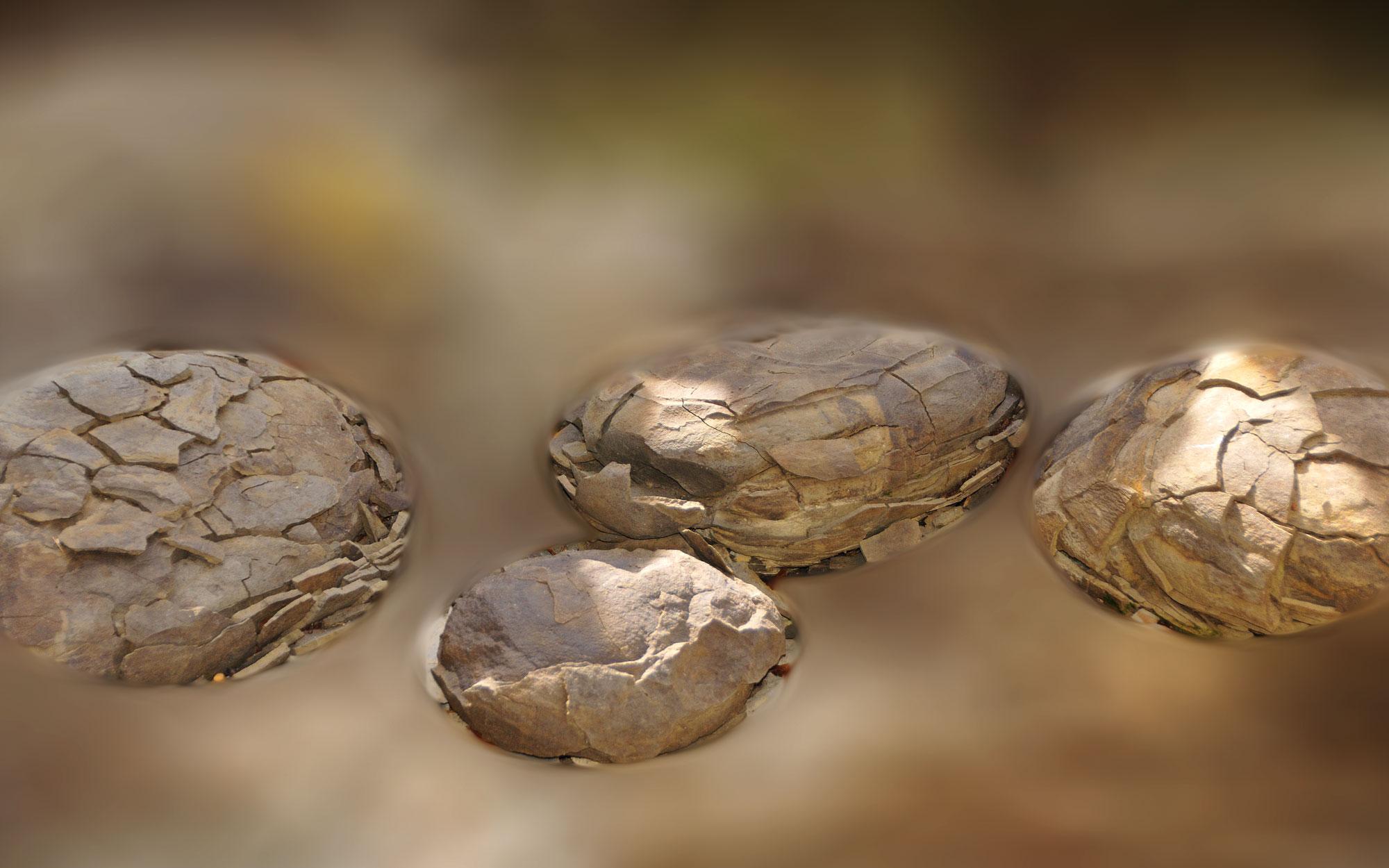 Oeufs fossilisés au musée régional de Paysac en Ardèche