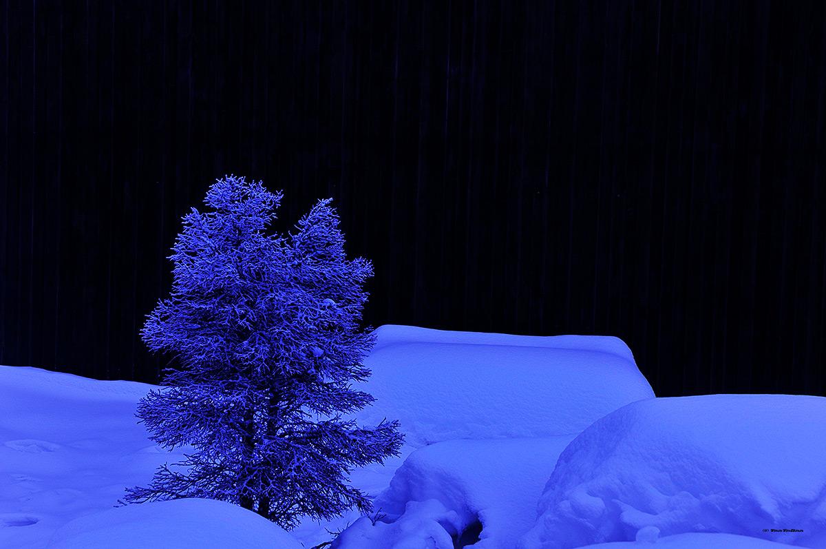 Sapin de nuit