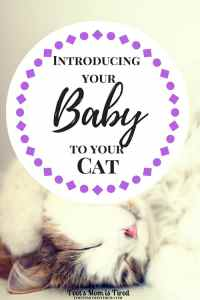Introducing Your Baby to Your Cat | Bringing a new baby into your cat's life is a hard transition. Here's how to introduce your cat to a new baby and keep them safe from each other
