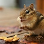 Top 10 Health Benefits Of Almonds