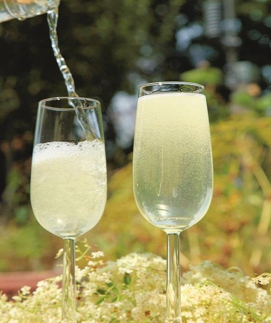 Homemade Elderflower Champagne