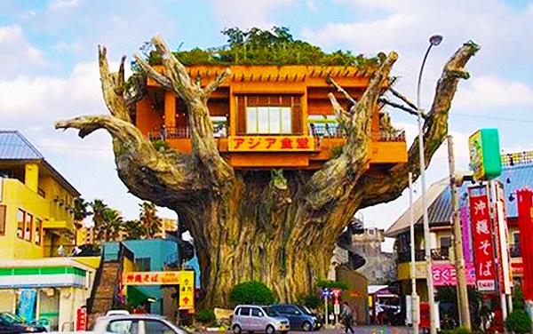 Tree House Restaurant, Naha, Japan