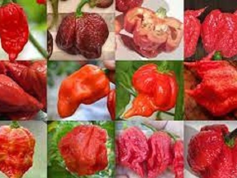 Ten of the Hottest Peppers From Around The World