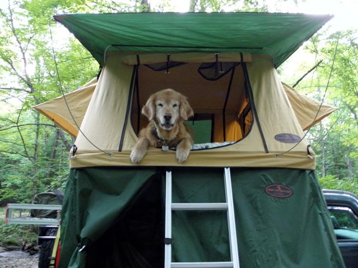 Roof Top Tent with Golden Retriever