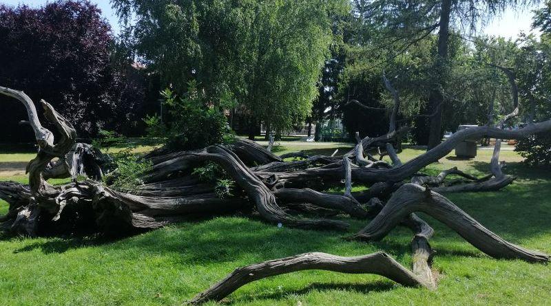 Priče Zmajčeka Pozojčeka: Drveće treba štiti