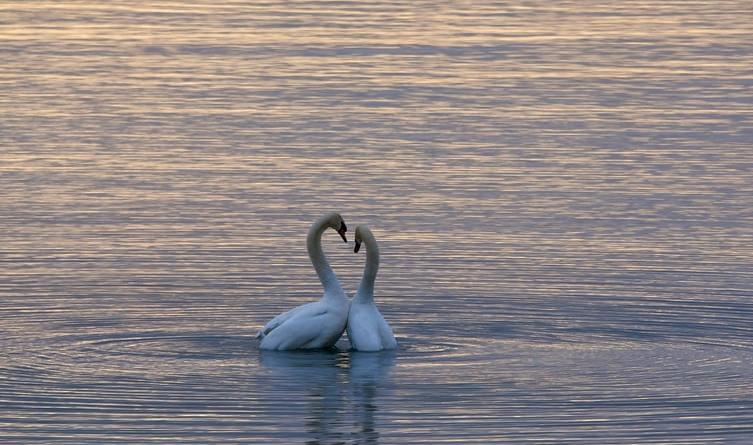 Andrea Biletić: Ljubav