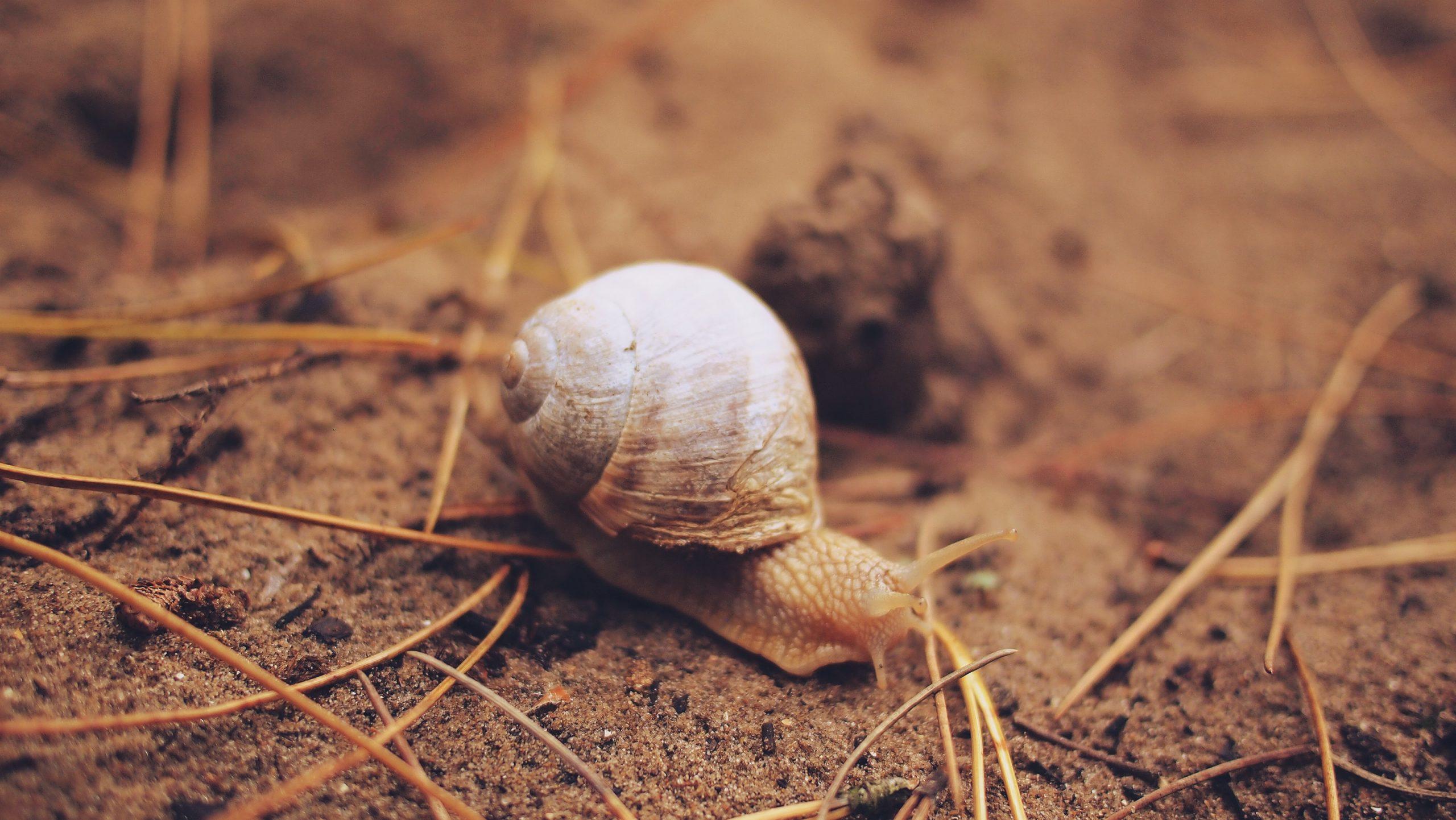 Anamarija Červar: Puž u mravinjaku