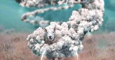Nikola Tomac: Vuk i ovca