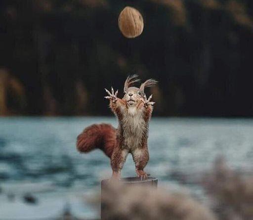Ana Kristić: Lisica i vjeverica
