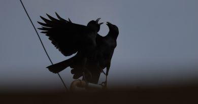 Ivan Tomljenović: Vrana i slavuj