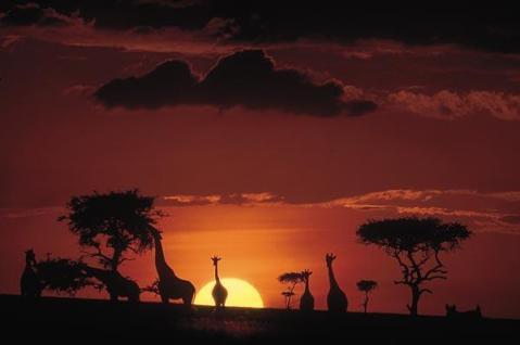 Reserva Nacional de Masai Mara