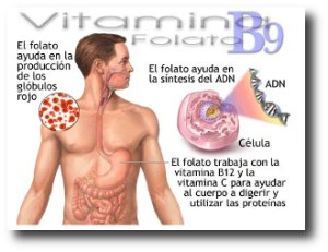 8. Vitamina B9