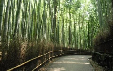 Bosque de bambú en Sagano