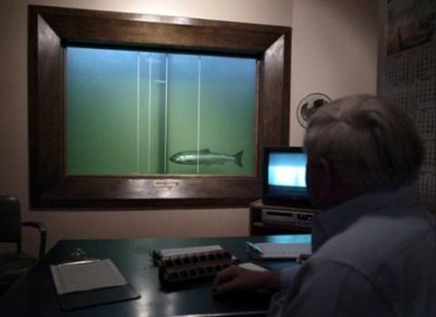 Contador de peces