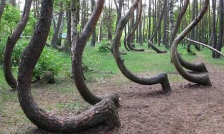 Los 10 bosques más extraños del mundo