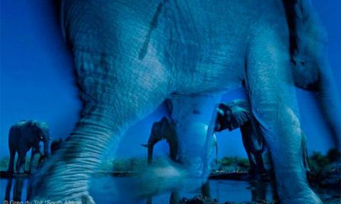 Elefantes en la Tuli Game Reserve de Botswana