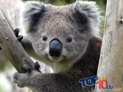 Los 10 animales mas lentos del mundo