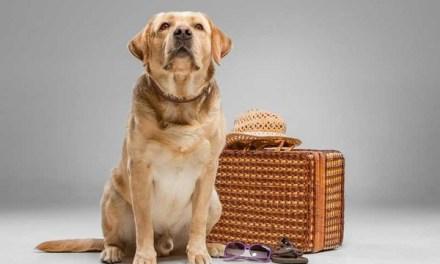 6 cosas que necesitas para viajar con tu mascotas