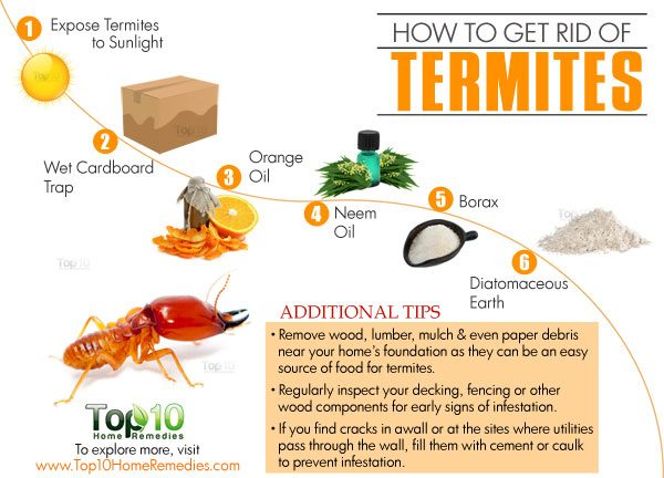 How To Get Rid Of Termites Top 10 Home Remedies