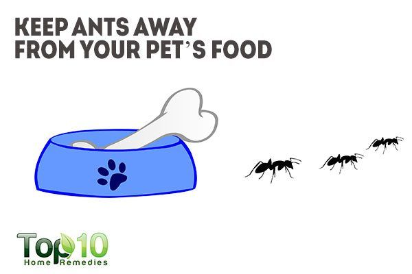 vaseline keeps ants away from your pet food