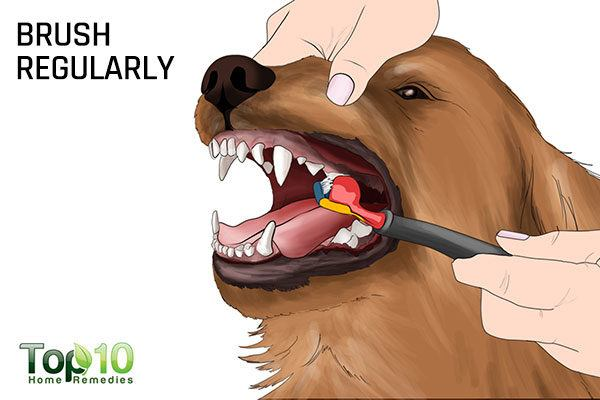 brush your dog's teeth