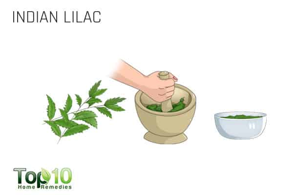 indian lilac for ringworm of the body