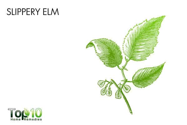 slippery elm to reduce swallowing pain