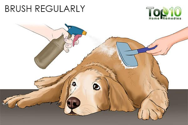 brush regularly how to deal with matted hair on your cat and dog