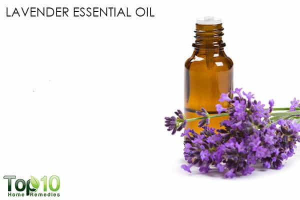lavender oil for migraine
