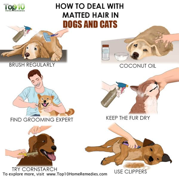 main image how to deal with matted hair on your cat and dog