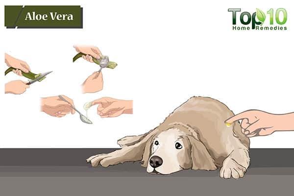 aloe vera to treat hot spots on dogs