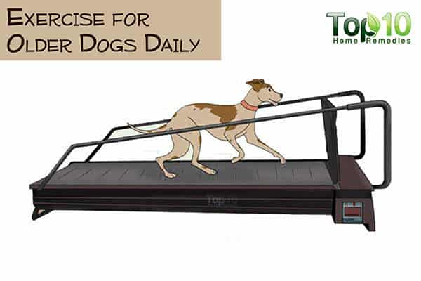 exercise your aging dog daily