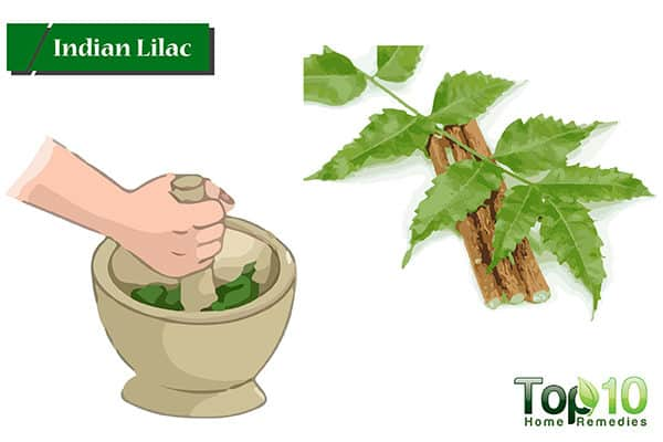 neem for receding gums